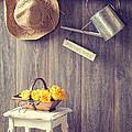 The Potting Shed by Amanda Elwell