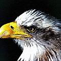 The Proud Eagle by Florian Rodarte