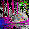 The Psychedelic Cat by Absinthe Art By Michelle LeAnn Scott
