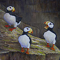 The Puffin Report by Dee Carpenter