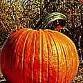 The Pumpkin by Chris Berry