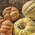 The Pumpkins Of Autumn by Jason Politte