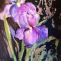 The Purple Iris by Sherry Harradence
