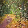 The Quiet Path by Tara Turner