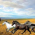The Race by Steve McKinzie