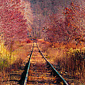 The Railroad by Tracey O'Connor