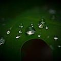 The Rain Fell by Shane Holsclaw