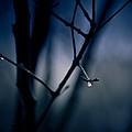The Rain Song by Shane Holsclaw
