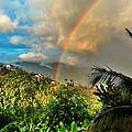 The Rainbow by Gary McNamee