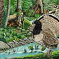 The Real Thunder Bird  by Carey MacDonald