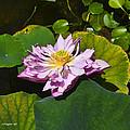 The Really Fancy Bloom by Allen Sheffield