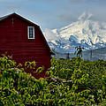 The Red Barn And Mt. Hood by Don Schwartz