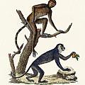 The Red Howler Monkey by Splendid Art Prints