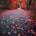 The Red Leaf by Tara Turner