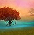 The Red Tree by Nina Bradica