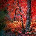 The Red Tree by Tara Turner