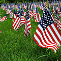 The Red White And Blue  American Flags by Donna Doherty