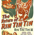 The Return Of Rin Tin Tin, Us Poster by Everett