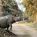 The Rhino At Kaziranga by Fotosas Photography