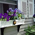 The Right Plant Boxes by Rita Brown