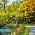 The River Road Curve by Steve Harrington