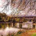 The Riverside At Avenham Park by Joan-Violet Stretch