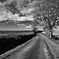 The Road by Christina Walker