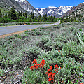 The Road Into Lundy Canyon by Lynn Bauer