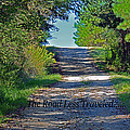 The Road Less Traveled by Barb Dalton