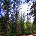 The Road Less Traveled by Bobbee Rickard