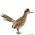State Bird Of New Mexico by Jack Pumphrey
