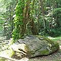 The Rock by Rosanne Bartlett