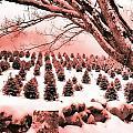 The Rocks In Winter by Jill Brooks