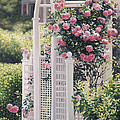 The Rose Arbor The Wauwinet by Julia O'Malley-Keyes