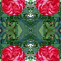 The Rose Garden - Red Roses by Susan Carella