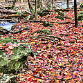 The Rose Petal Path by JC Findley