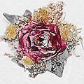 The Rose by Susan Leggett