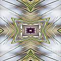 The Sacred Pine Mandala Yantra by Marie Jamieson