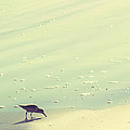 The Sandpiper by Amy Tyler