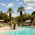 The Sandpiper Pool Palm Desert by William Dey