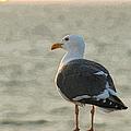 The Seagull by Ernie Echols
