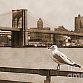 The Seagull Of The Brooklyn Bridge Vintage Look by RicardMN Photography