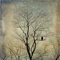 The Sentinel by Kerri Farley