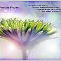 The Serenity Prayer by Debbie Nobile