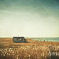 The Shack - Lbi by Colleen Kammerer