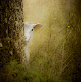 The Shy Lamb by Loriental Photography