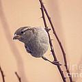 The Sideways Sparrow by Janice Pariza