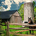 The Silo Horse by Diana Angstadt