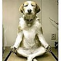 The Sitting Dog by Scoot My life