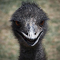 The Smile by Ernie Echols